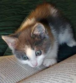 Cat reading wide-eyed