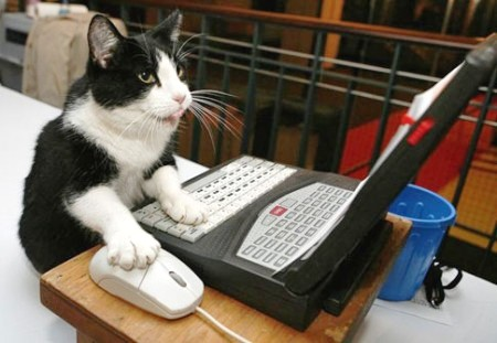 Cat working on computer