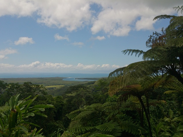 The Daintree Rainforest, a tropical rainforest and UNESCO World Heritage Site along the coast of Queensland, Australia.