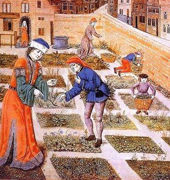 Later medieval herb garden