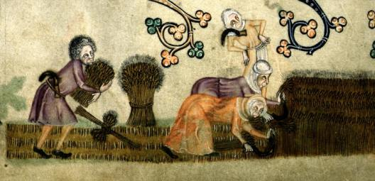 Villeins reaping, from the Luttrell Psalter (c.1320-1340, Lincolnshire, England)