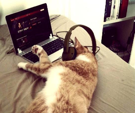 Cat watching Netflix